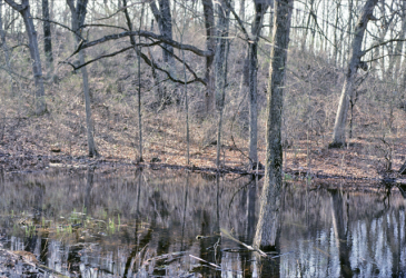 Ephemeral wetland in southeastern Wisconsin. Photo by Eric Epstein.