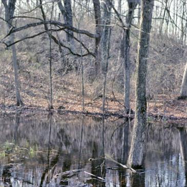 Ephemeral wetland in southeastern Wisconsin. Photo by Eric Epstein.